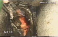 atvr020_-_farm_digest_-_animal_tales_-_videorama_2_sv