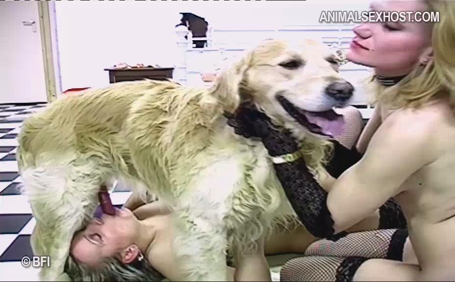 The biggest animal sex community of the world
