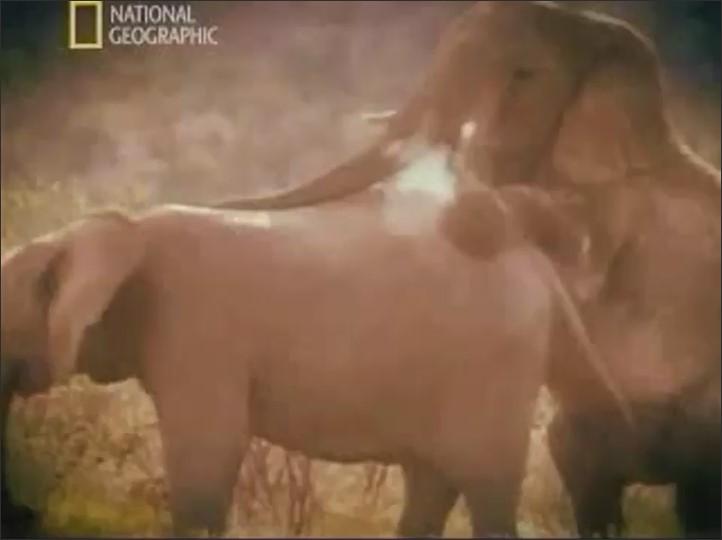 Man Fucking Horse  Animalsex Video-2705