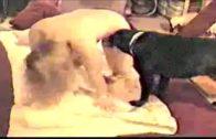 Mignight Dog Dream