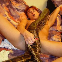 animal_sex_02